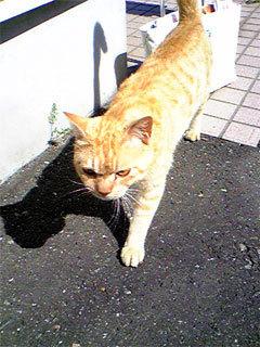 Cat2_2